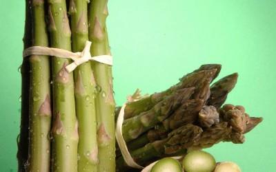 Iniziata la raccolta degli asparagi