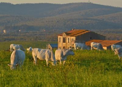 Zona_Produzione_Asparago_Verde_Canino_0857